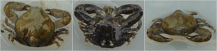 ファイル 291-4.jpg